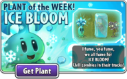Ice Bloom Plant of the Week December 2020