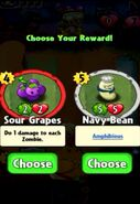 Choice between Sour Grapes and Navy Bean