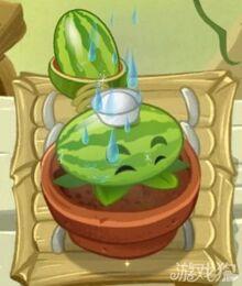 65-Melonpulta regado.jpg
