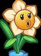 Narcissushd