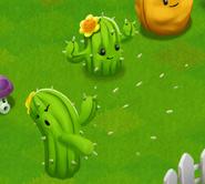Cactusconcept2