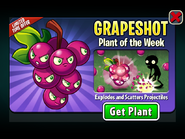 Grapeshot Plant of the Week