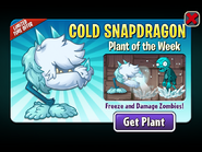 Cold Snapdragon Plant of the Week