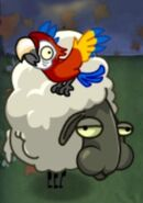 Parrot on Sheep