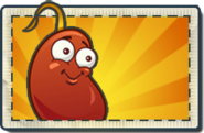 Chili Bean Boosted Seed Packet