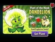 Plant of the Week Dandelion