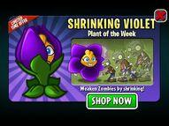 ShrinkingVioletPlantoftheWeek