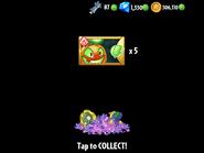 Obtaining Jack-o-Lantern Seed Packets