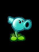 Water Pea