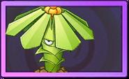 Tupistra Stalker Super Rare Seed Packet