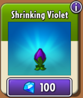 Shrinking Violet In Store