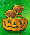 Twin Sunflower pumpkin