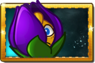 Shrinking Violet Premium Seed Packet