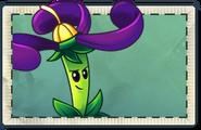 Nightshade Seed Packet