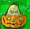 Squash pumpkin