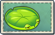 Lily Pad Seed Packet