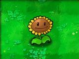 Sunflower (PvZ)