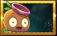 Gumnut Premium Seed Packet