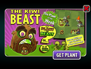 Plant of the Week Kiwibeast