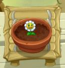 Growing Marigold PvZ2