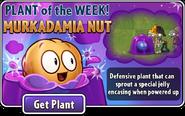 Plant of the Week Murkadamia Nut