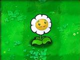 Marigold (PvZ)