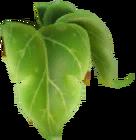 Peashooter berryblast 1