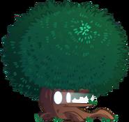 Cypress plantfood close up