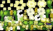 PLANTELAEOCARPUS 1536 00
