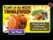 Plant of the Week Tumbleweed