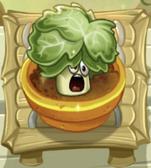 Boosted Headbutter Lettuce