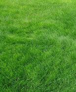Grass(real).jpg