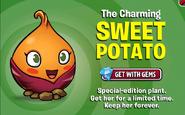 Sweet Potato ad