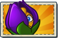 Shrinking Violet Boosted Seed Packet