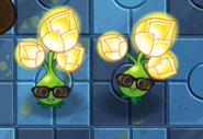Wearegoldblooms