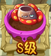 Rafflesia AS ZG