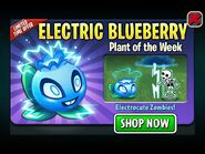 ElectricBlueberryPlantoftheWeek