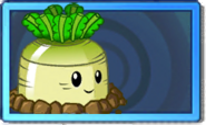 Greenturnip Rare Seed Packet