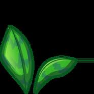 Umbella Plant2