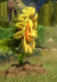 Rooted Sunflower
