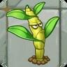 Windbreak Dendrobium2