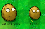 Giant Wall-nuts Comparison