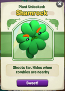 Shamrock got