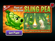 Plant of the Week Sling Pea
