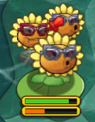 Triplet Sunflower about