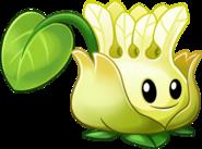 Elaeocarpus HD