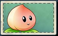 Peach Seed Packet