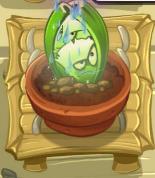 CeleryStalkerWatered