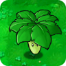 Umbrella Leaf