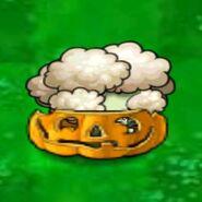 VigorousCauliflowerInsidePumpkin